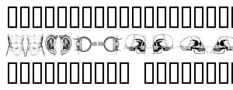 глифы шрифта The body, vol. i, символы шрифта The body, vol. i, символьная карта шрифта The body, vol. i, предварительный просмотр шрифта The body, vol. i, алфавит шрифта The body, vol. i, шрифт The body, vol. i