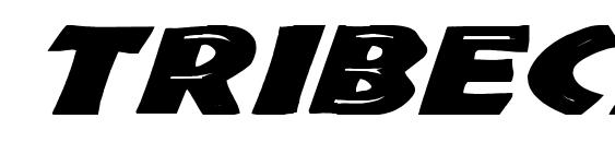 Tribeca Wd Bold Italic Font